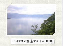 ヒメマスが生息する十和田湖